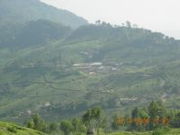 MUNNAR MOUNTAINS 5