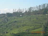 MUNNAR MOUNTAINS 6