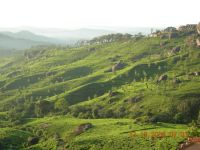 MUNNAR MOUNTAINS