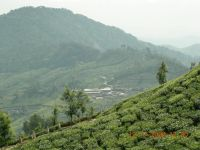 MUNNAR MOUNTAINS 2