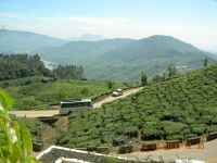 MUNNAR MOUNTAINS 3