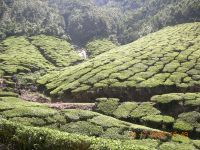 MUNNAR MOUNTAINS 4