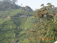 MUNNAR MOUNTAINS 7