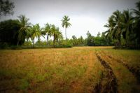 FIELD SOUTH INDIA