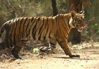 SUNDERBAN NATIONALPARK