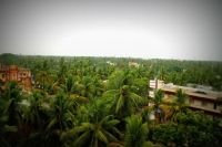TOP VIEW COCONUT TREES